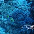 20101001 (2) 六米礁 p_IMG_3301.jpg