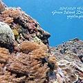 20101001 (2) 六米礁 p_IMG_3317.jpg