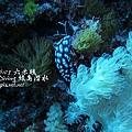 20101001 (2) 六米礁 p_IMG_3302.jpg