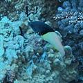 20101001 (2) 六米礁 p_IMG_3311.jpg