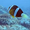 20101001 (2) 六米礁 p_IMG_3325.jpg