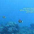 20101001 (2) 六米礁 p_IMG_3326.jpg