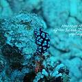 20101001 (2) 六米礁 p_IMG_3320.jpg
