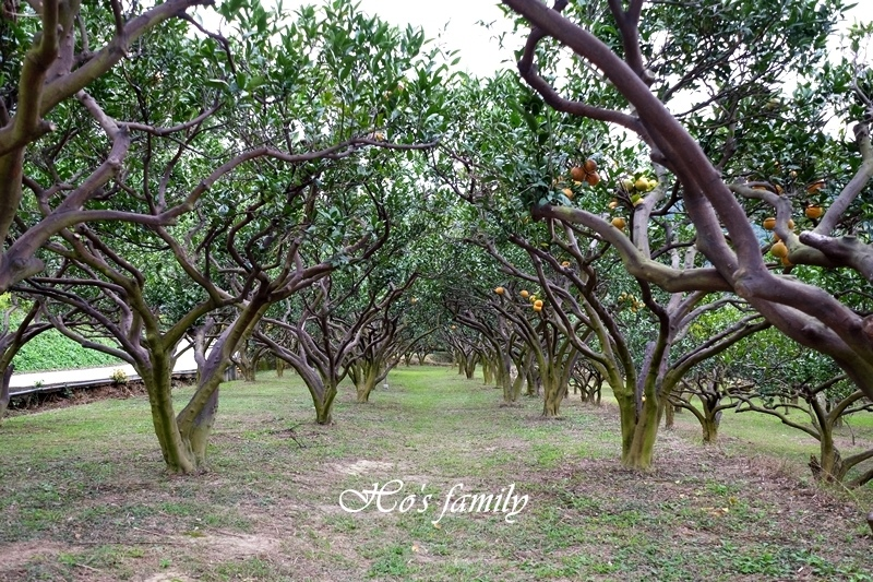 【苗栗景點】橙香森林32.JPG