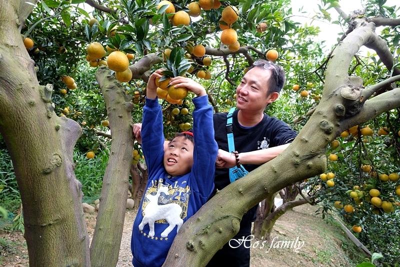 【苗栗景點】橙香森林33.JPG
