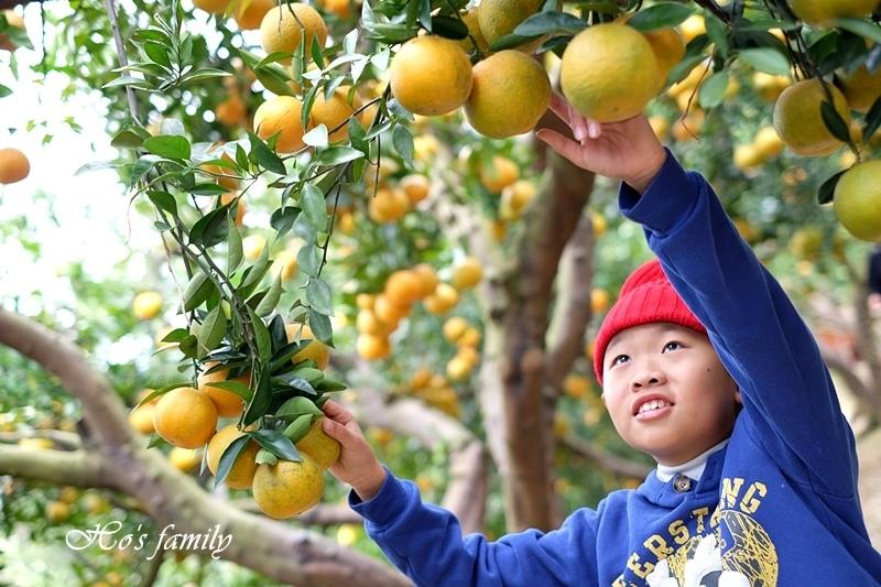 【苗栗景點】橙香森林34.JPG