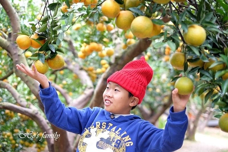 【苗栗景點】橙香森林35.JPG