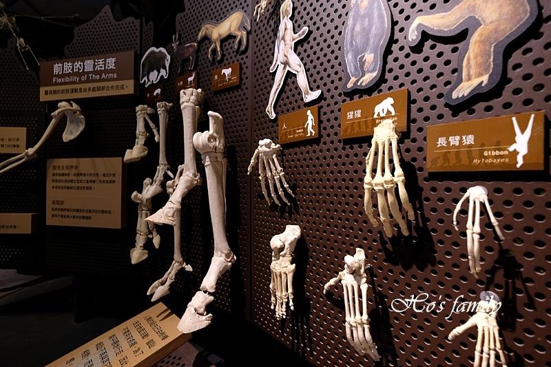 【台南親子景點】樹谷生活科學館34.JPG