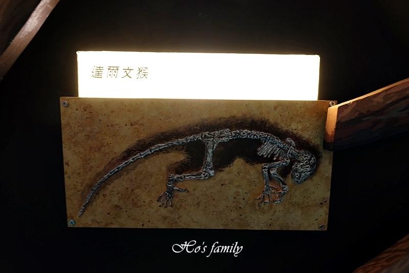 【台南親子景點】樹谷生活科學館37.JPG