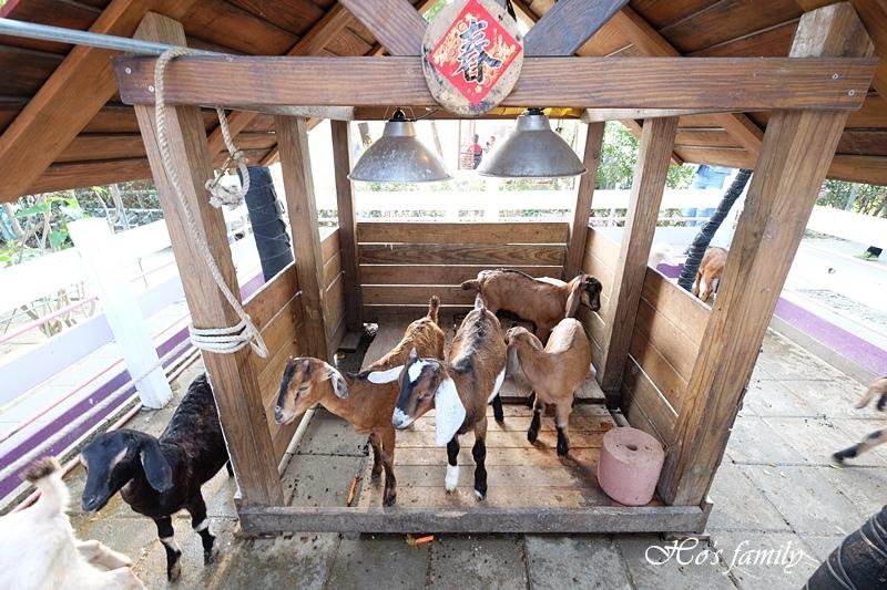 【台南親子景點】樹谷農場4.JPG