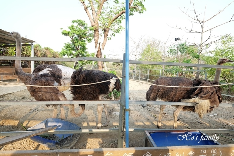 【台南親子景點】樹谷農場21.JPG