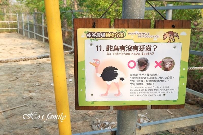 【台南親子景點】樹谷農場22.JPG