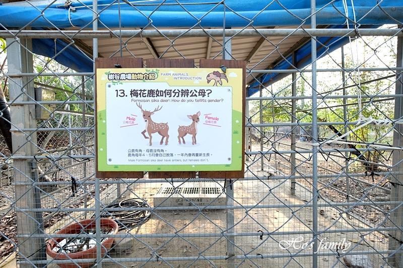 【台南親子景點】樹谷農場31.JPG