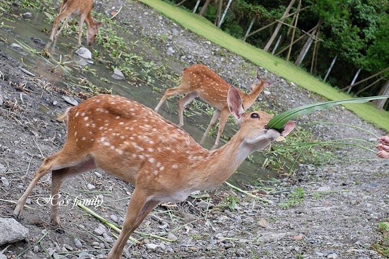 【宜蘭新景點2019】斑比山丘29.JPG