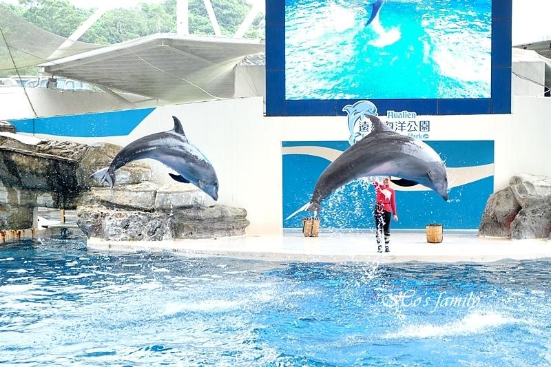 【花蓮親子景點2019】花蓮遠雄海洋公園15.JPG