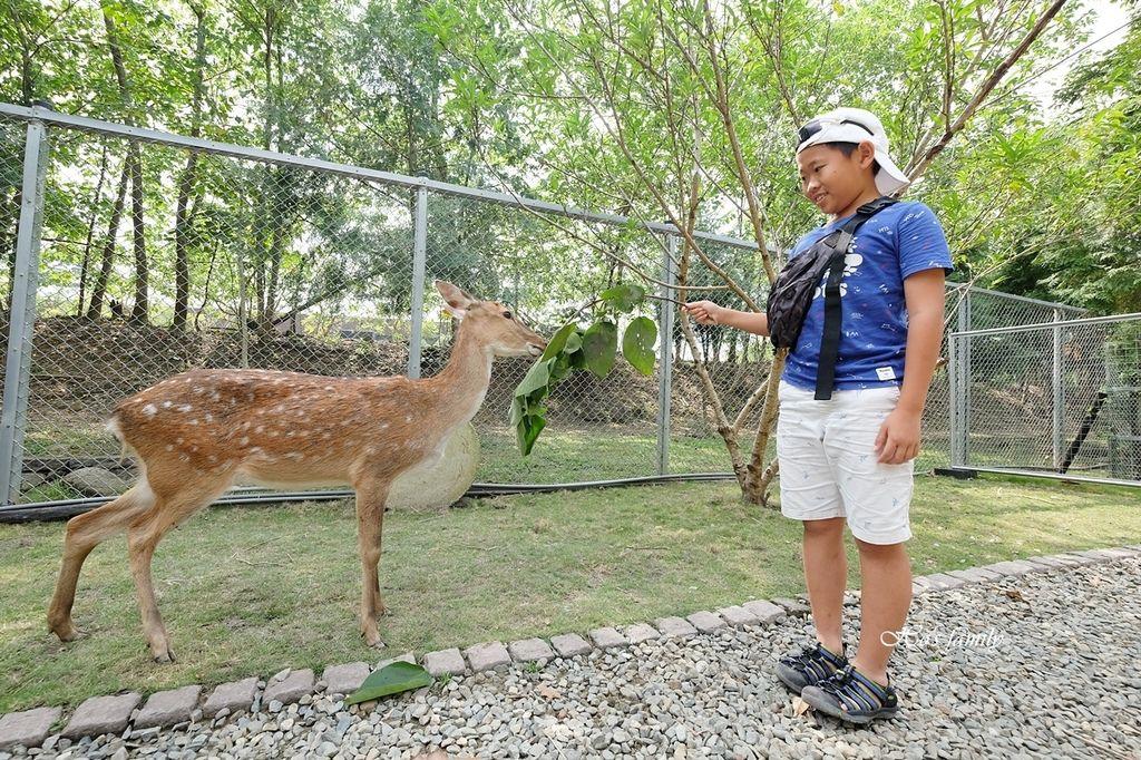 【嘉義阿里山親子景點】逐鹿部落9.JPG