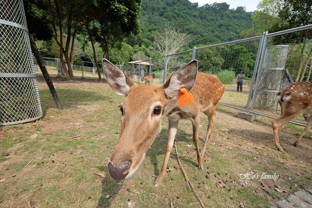 【嘉義阿里山親子景點】逐鹿部落12.JPG