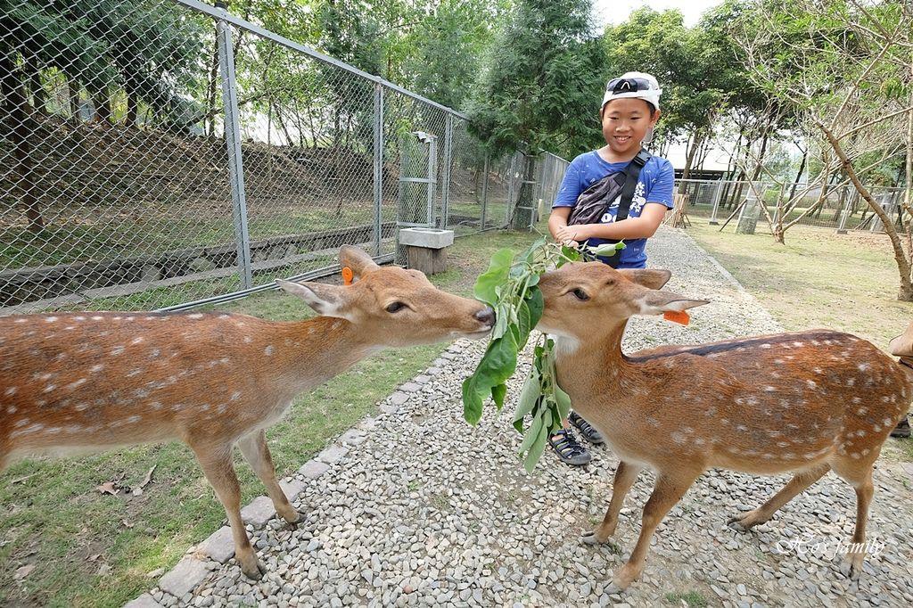 【嘉義阿里山親子景點】逐鹿部落13.JPG