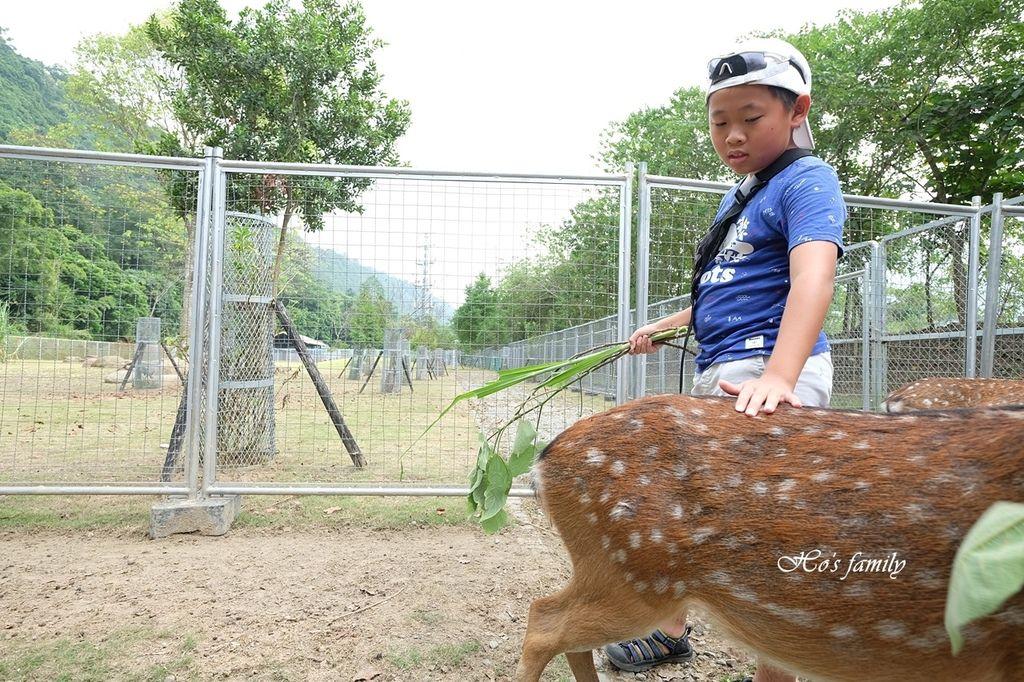 【嘉義阿里山親子景點】逐鹿部落16.JPG