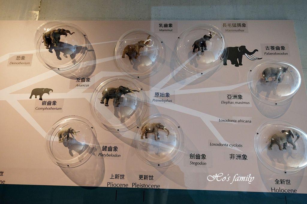 【台南親子景點】臺南左鎮化石園區72.JPG