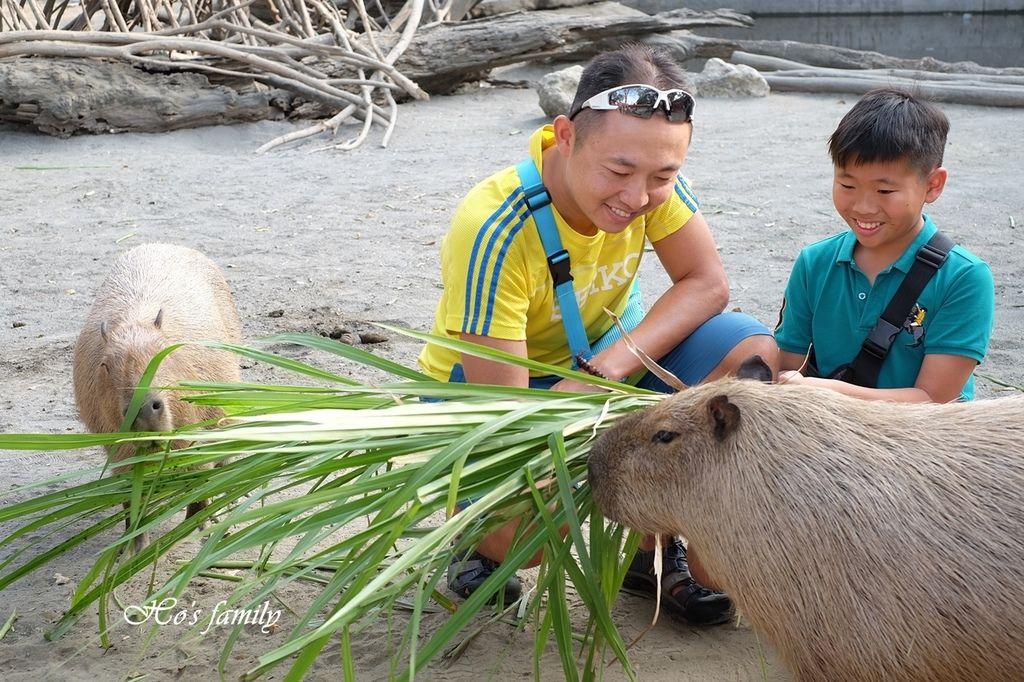 【台南親子景點】頑皮世界野生動物園41.JPG