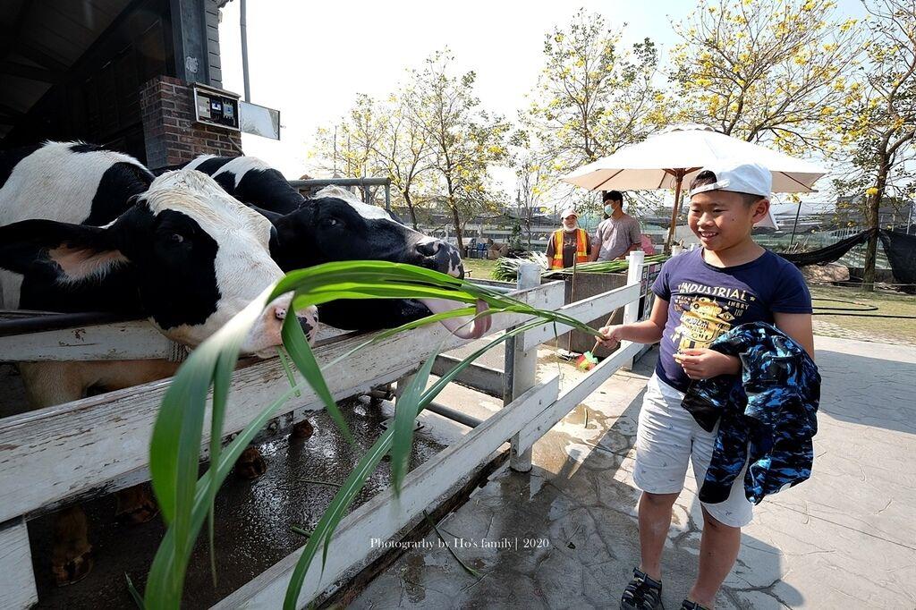 【雲林親子景點】千巧谷牛樂園牧場~免門票親子農場進距離親近餵乳牛、玩沙19.JPG