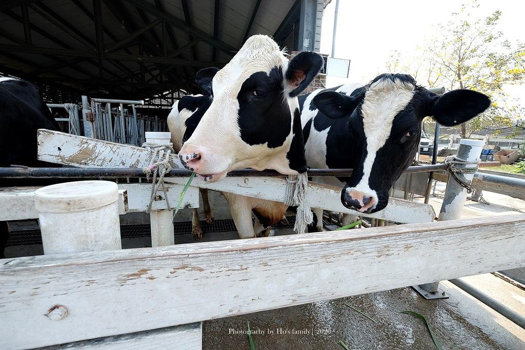 【雲林親子景點】千巧谷牛樂園牧場~免門票親子農場進距離親近餵乳牛、玩沙20.JPG