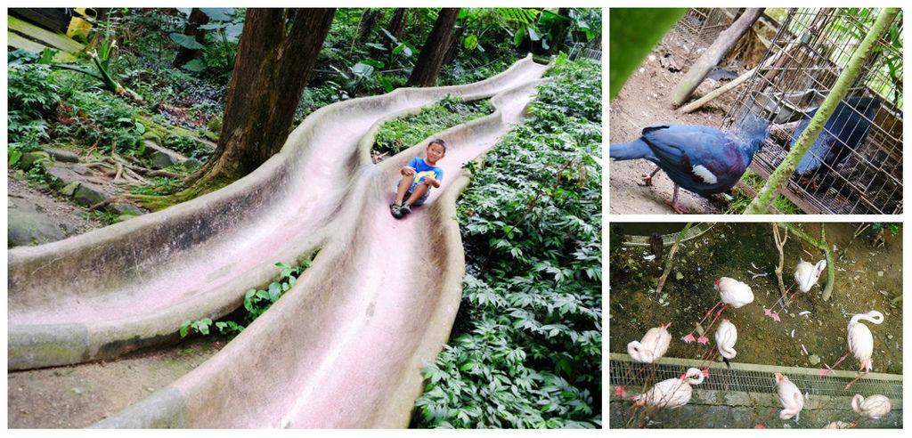 【南投親子景點】鳳凰谷鳥園生態園區~銅板價生態園區森呼吸!全台最長森林溜滑梯、春賞螢夏賞蝶;;鸚鵡、鳥類近距離接觸fb.jpg