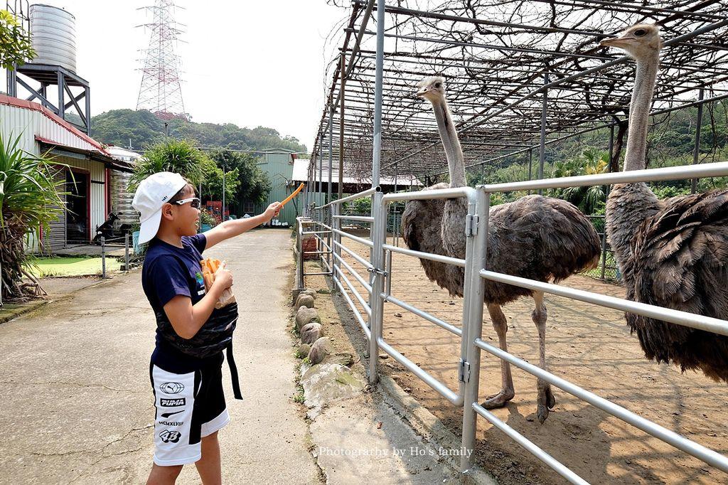 【新北林口親子景點】台灣山豬城~隱藏版農場餵動物、吃美食!高cp值合菜親友聚餐推薦7.JPG