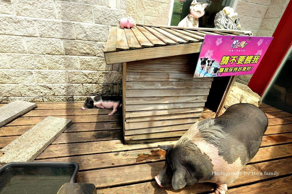 【桃園大溪親子景點】花開了休閒農場~免門票親子樂園!戲水池玩水、小火車、玩沙、餵小動物,親子農場一日遊27.JPG