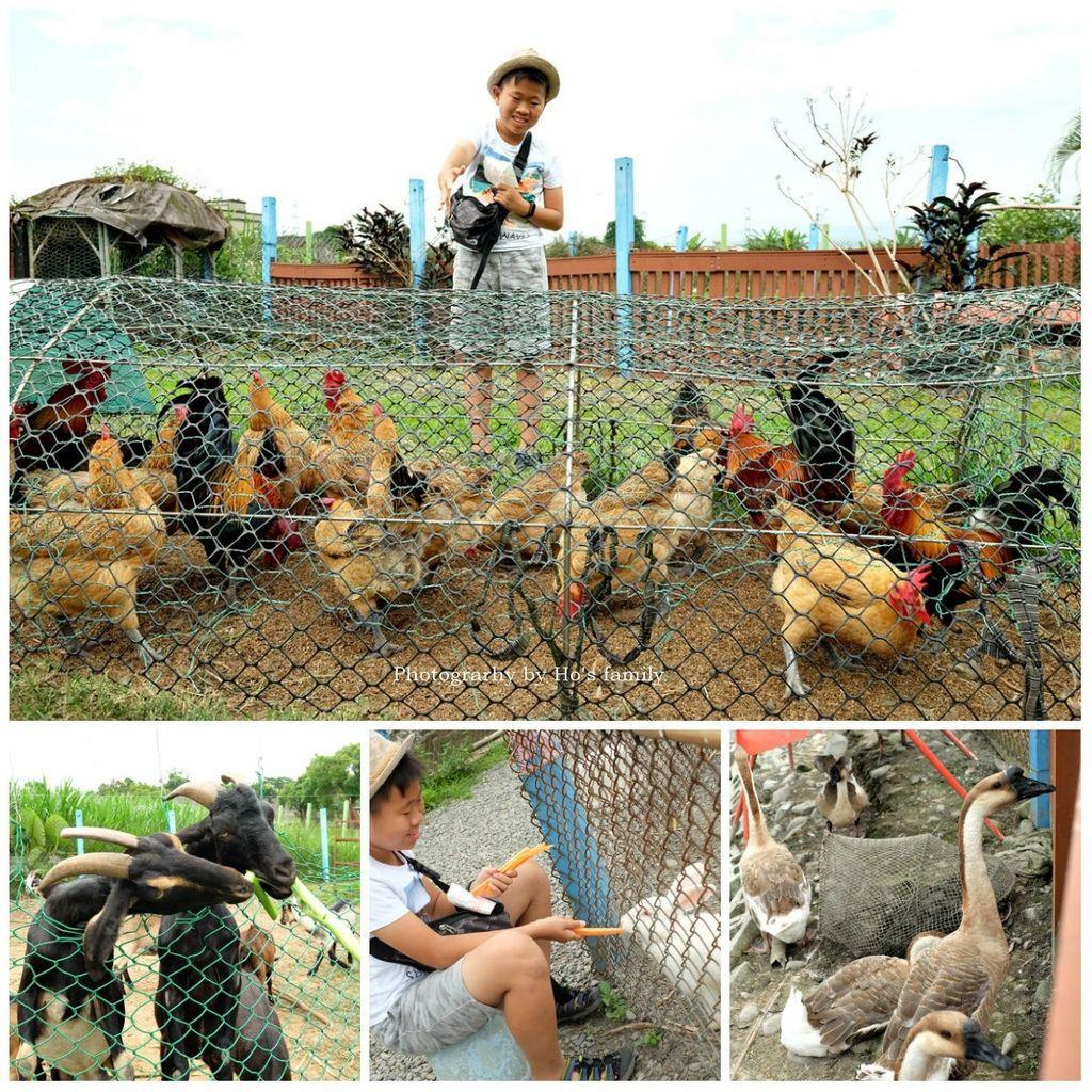 【宜蘭親子景點】親子農場可達休閒羊場~免門票!近距離親近餵動物、擠羊奶,宜蘭員山一日遊景點.jpg