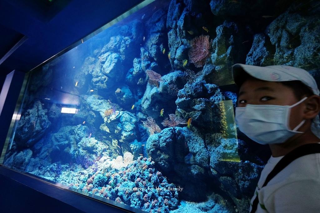 【桃園水族館Xpark】門票預購、開幕時間、飯店住宿、交通19.JPG