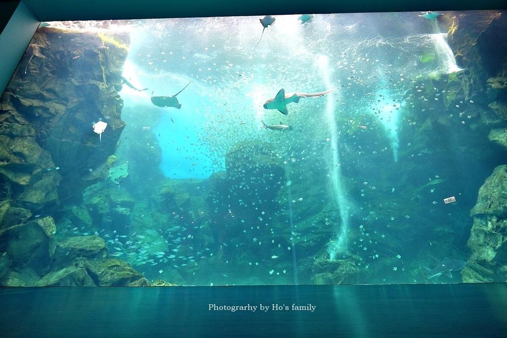【桃園水族館Xpark】門票預購、開幕時間、飯店住宿、交通21.JPG