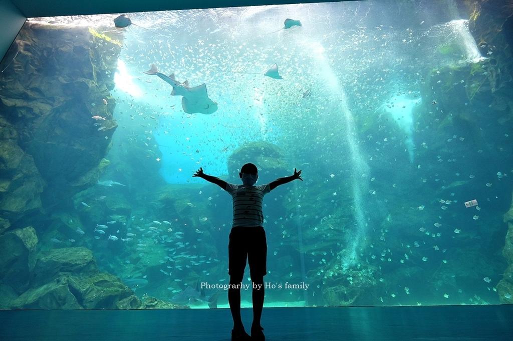 【桃園水族館Xpark】門票預購、開幕時間、飯店住宿、交通20.JPG