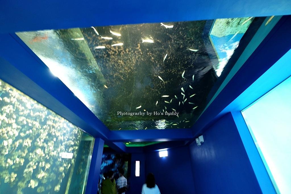 【桃園水族館Xpark】門票預購、開幕時間、飯店住宿、交通18.JPG