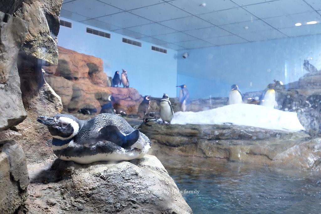 【桃園水族館Xpark】門票預購、開幕時間、飯店住宿、交通36.JPG