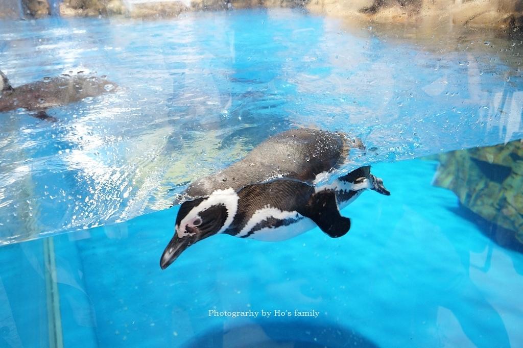 【桃園水族館Xpark】門票預購、開幕時間、飯店住宿、交通37.JPG