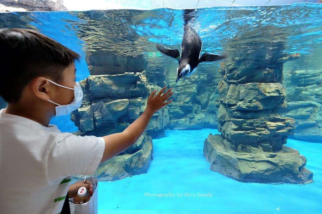 【桃園水族館Xpark】門票預購、開幕時間、飯店住宿、交通39.JPG