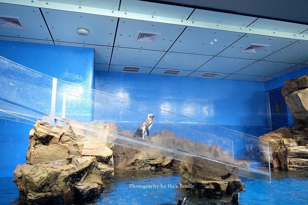 【桃園水族館Xpark】門票預購、開幕時間、飯店住宿、交通43.JPG