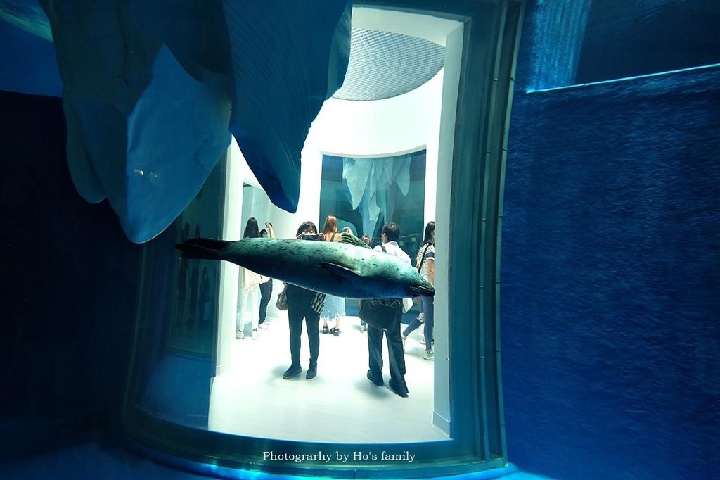 【桃園水族館Xpark】門票預購、開幕時間、飯店住宿、交通66.JPG