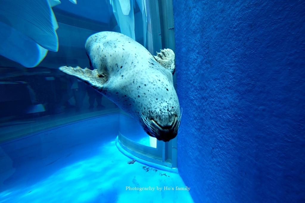 【桃園水族館Xpark】門票預購、開幕時間、飯店住宿、交通67.JPG