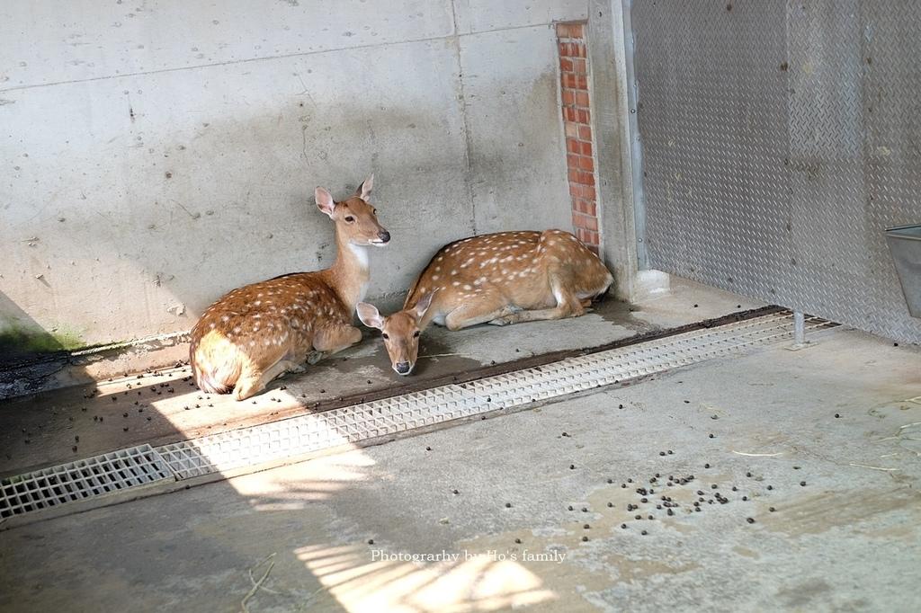 【嘉義親子景點】三隻小豬觀光農場7.JPG