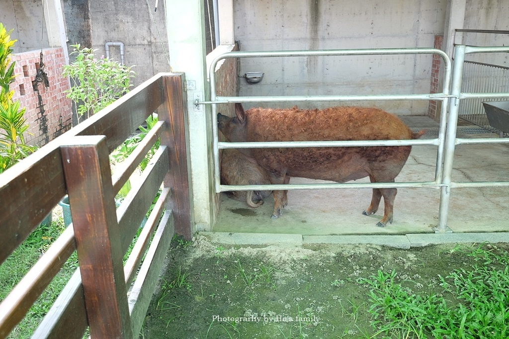 【嘉義親子景點】三隻小豬觀光農場9.JPG