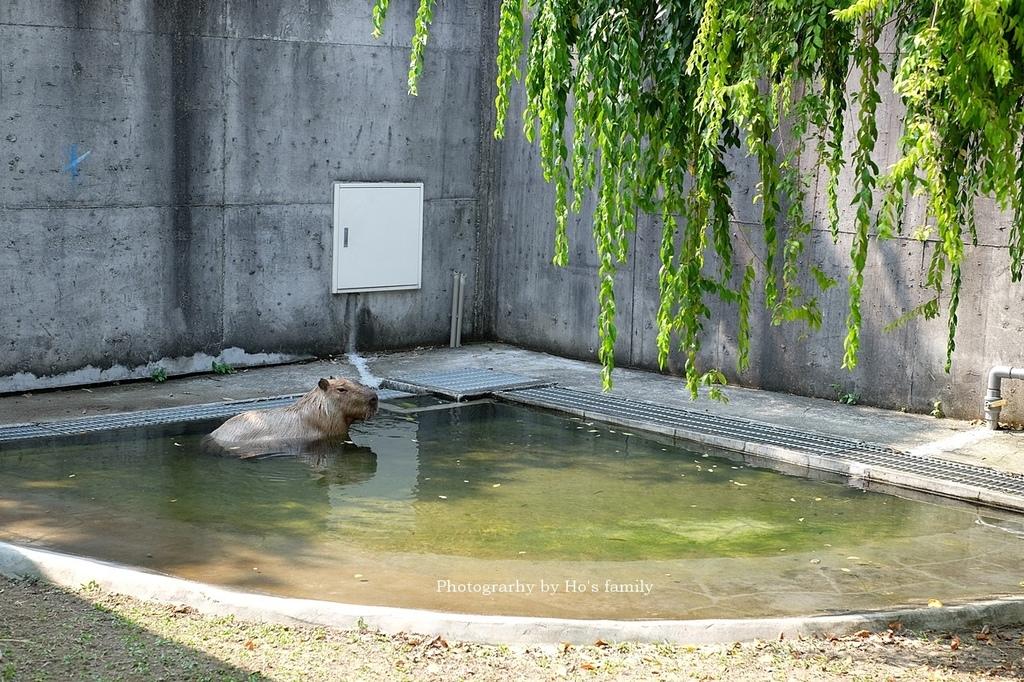 【嘉義親子景點】三隻小豬觀光農場10.JPG