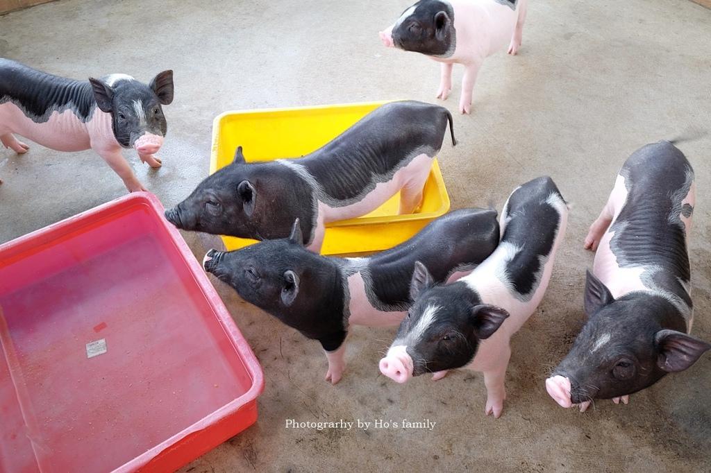 【嘉義親子景點】三隻小豬觀光農場43.JPG