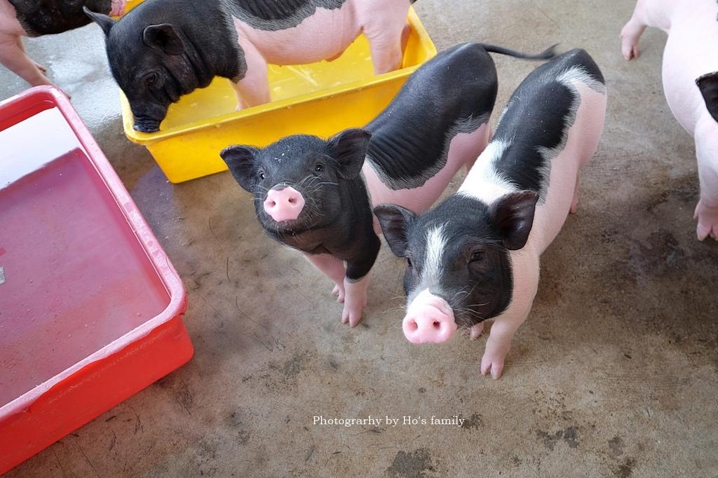 【嘉義親子景點】三隻小豬觀光農場44.JPG