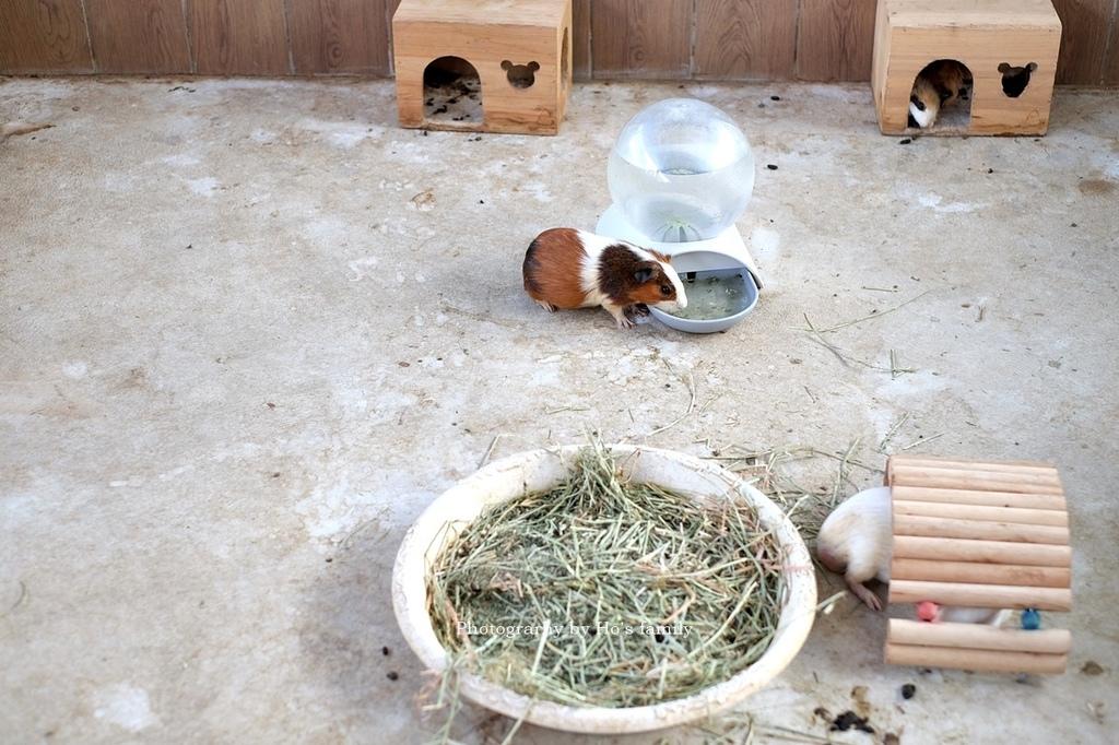 【嘉義親子景點】三隻小豬觀光農場45.JPG