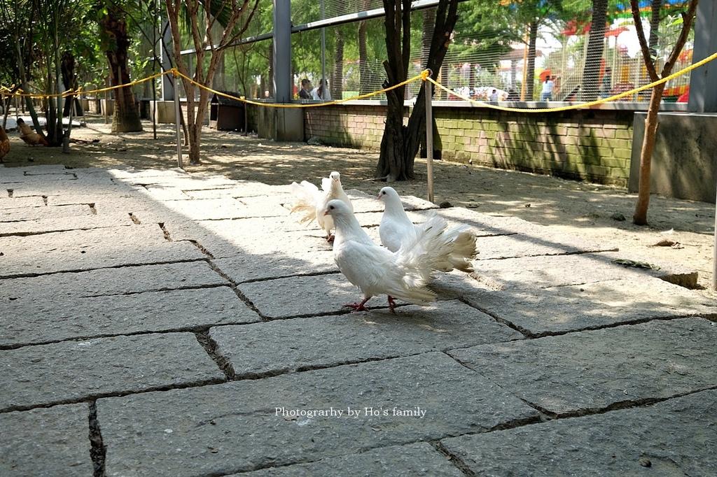 【嘉義親子景點】三隻小豬觀光農場50.JPG