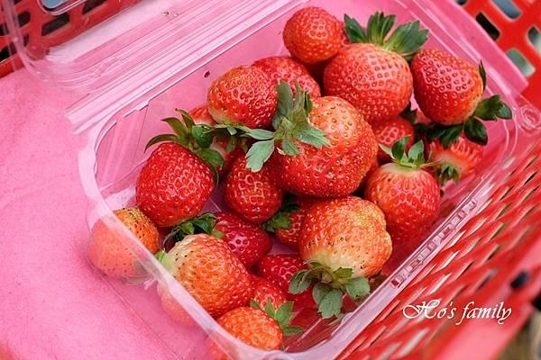 草莓怎麼洗.jpg