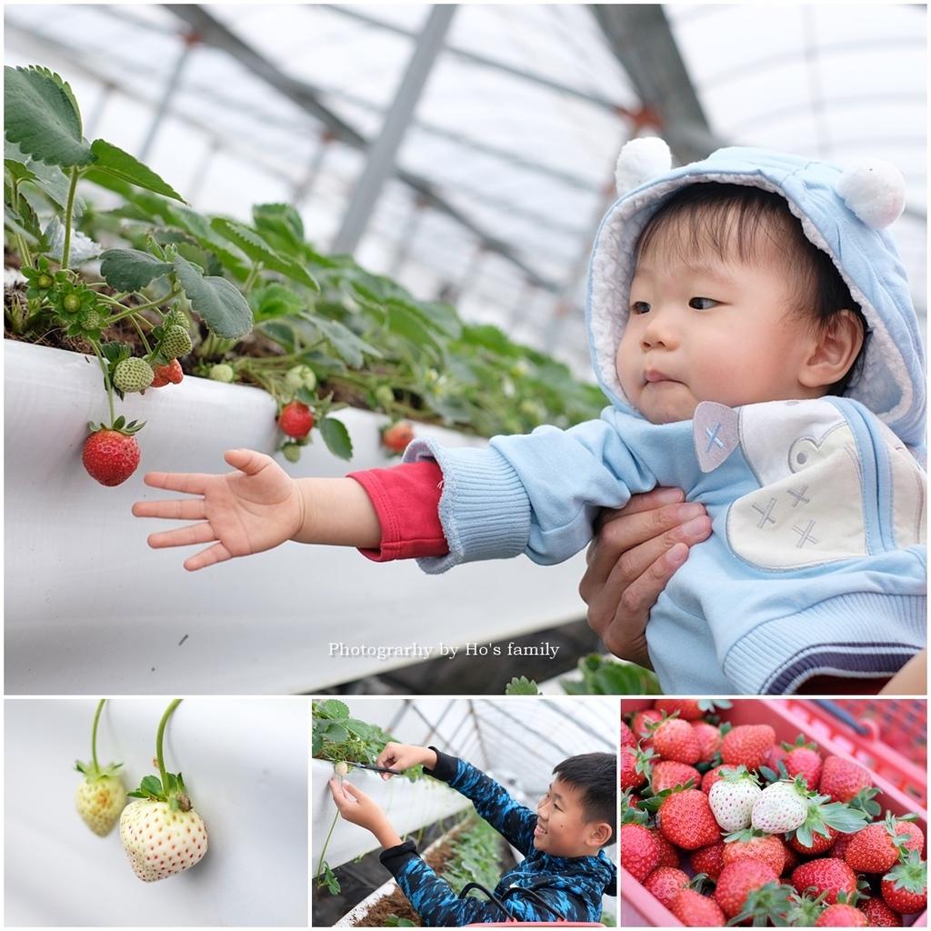 【宜蘭採草莓景點】本事農莊.jpg